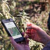 PlantNet : contribuez à l'observation et la collecte de données sur les plantes